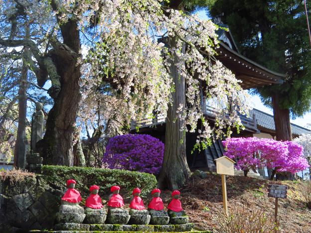桜の下のお地蔵さまたち。