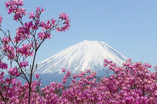 写真: 薄紫に咲く季節。