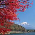 写真: 春にも紅く、もみじかな。