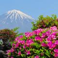 写真: ツツジも咲き始め。