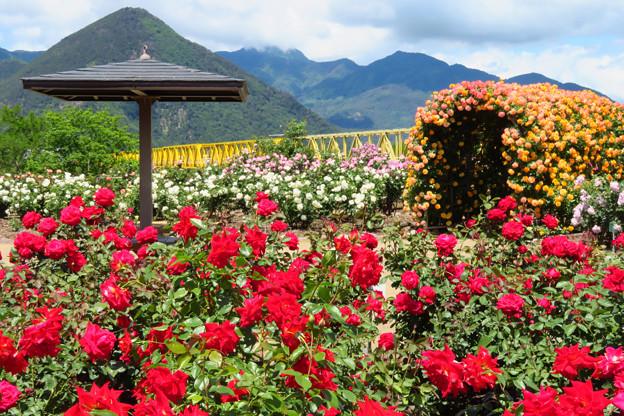 賑うバラの花園。