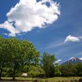 Photos: マロニエの花咲く公園。