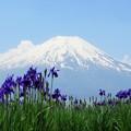 写真: アヤメブルーと空の青。