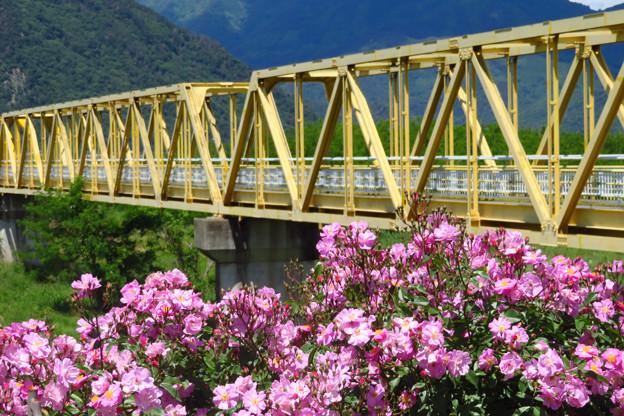 黄色鉄橋と紫バラ。