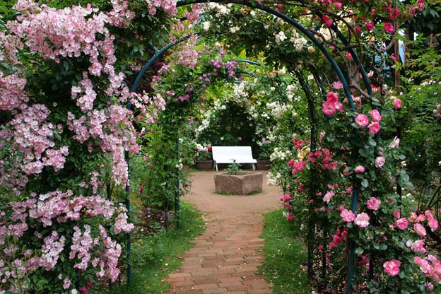 バラ園の秘密のベンチ。