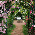 Photos: バラ園の秘密のベンチ。