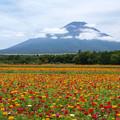 Photos: カラフルお花畑。
