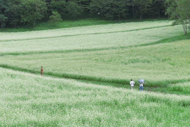 そば畑、お散歩楽し。
