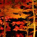写真: ナイトの紅葉。