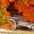 紅葉の向こうの古荷車。