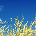 初春の色と香。