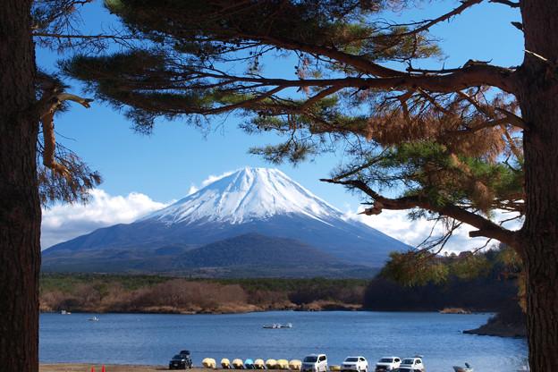 松の間から見える日本一。