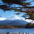 写真: 松の間から見える日本一。