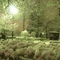 Photos: 雪夜の公園。