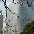 Photos: 大都会の紅梅の枝ぶり。