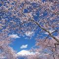 Photos: 弥生の桜額。