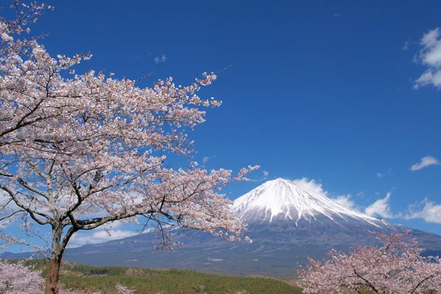 桜の丘からの見晴らし好きかな。