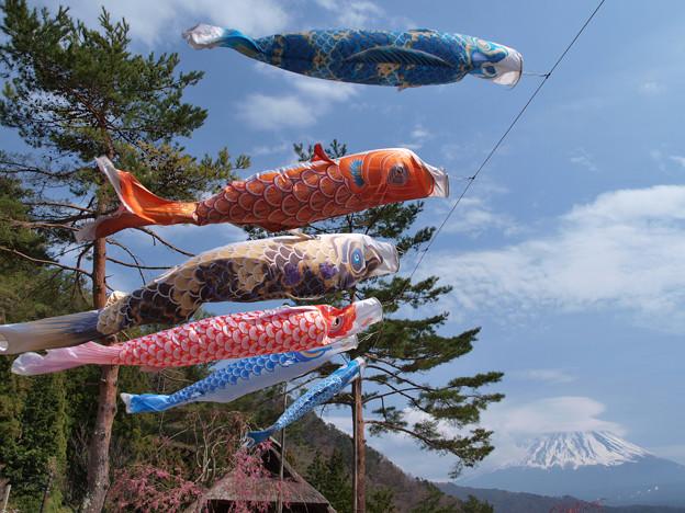 平成に泳ぐ鯉。
