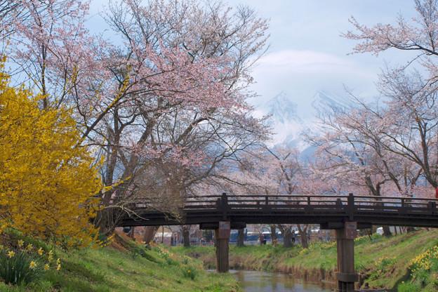 忍野にも春が来て。