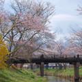Photos: 忍野にも春が来て。