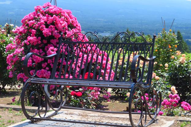 あなたと座る、薔薇ベンチ。