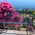 Photos: あなたと座る、薔薇ベンチ。