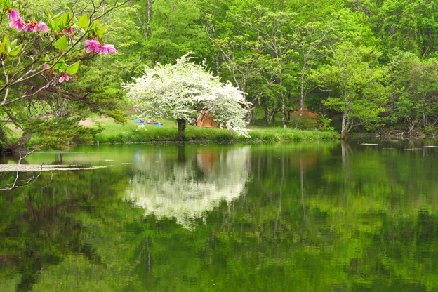 高原の小池を飾る一本木。