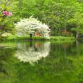 Photos: 高原の小池を飾る一本木。
