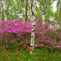 高原に紫の花眩しい。
