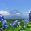 青紫陽花と青い空。