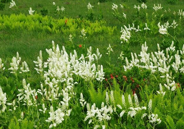 賑わいの高原の花。