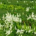 Photos: 賑わいの高原の花。