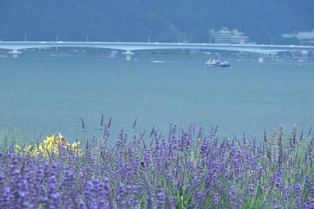 Photos: 大橋むこうにラベンダー。