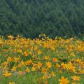Photos: 今年は賑わう高原の花。