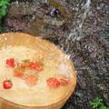 Photos: 冷やしトマト。