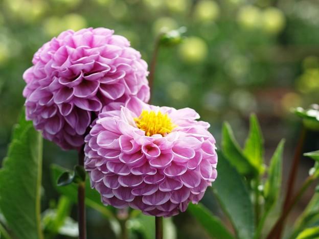 紫の妖艶。