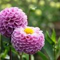 Photos: 紫の妖艶。