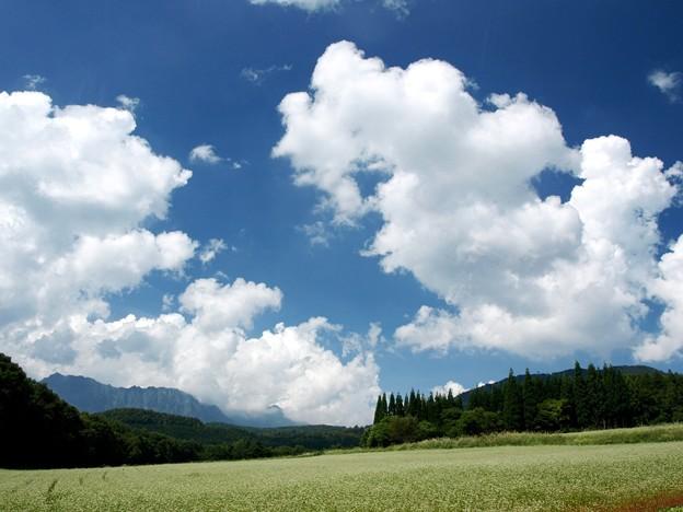 雲わくそば畑。