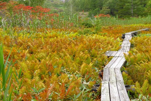 湿原の紅葉始まる。