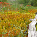 Photos: 湿原の紅葉始まる。