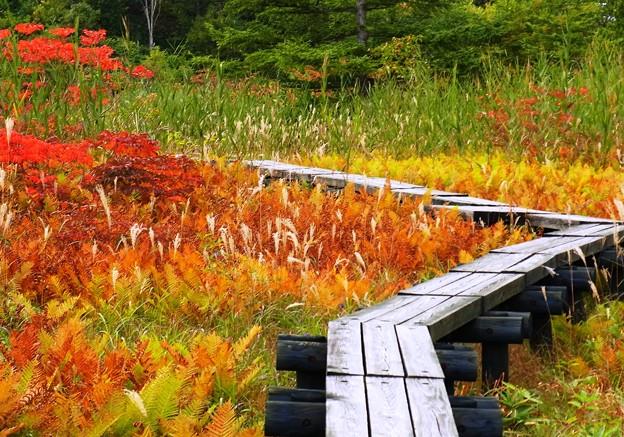 深まる色や、草紅葉。