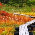 Photos: 深まる色や、草紅葉。