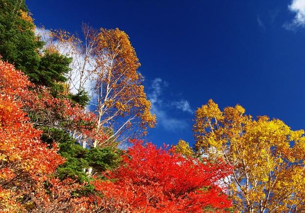 仰ぎ見る紅葉と空。