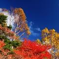 Photos: 仰ぎ見る紅葉と空。