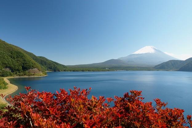 赤いドウダン、青い湖。