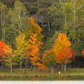Photos: 背くらべの紅葉。