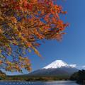 Photos: あの木の紅葉濃く。