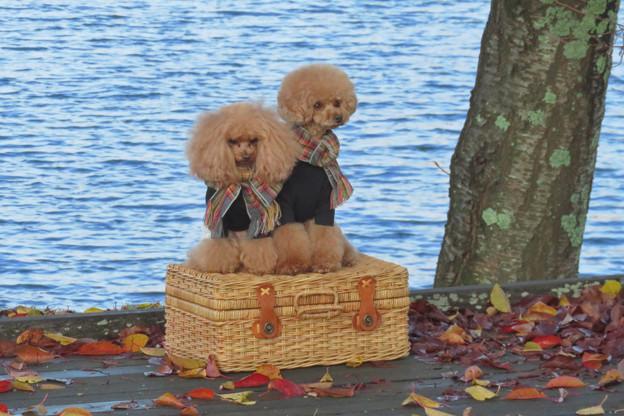 湖畔でポーズだワン。
