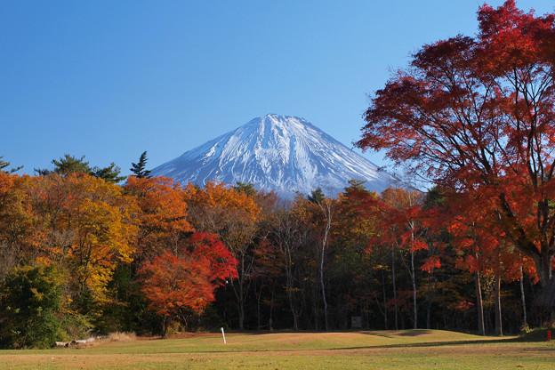 Photos: 紅葉の公園。