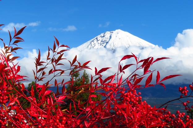 実も葉も真っ赤に。